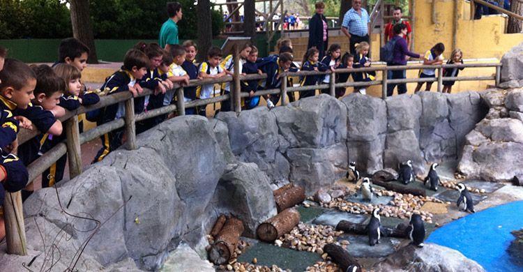 zoo-primaria-15